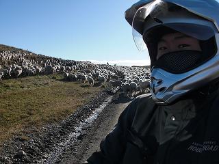 090501_sheepMe.jpg